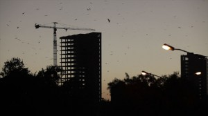 "Addis constructions and a sky full of ""vultures"" - quite symbolic…"